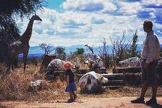 Vi landar på afrikansk mark där vår svensktalande reseledare och guide möter oss. Vi färdas medbil till Udzungwa. där vi checkar in på vår lodge och äter lunch och får chans att svalka oss i poolen. Regnskogsvandring för vårt första möte med djurlivet innan vi kryper ned i sängarna den första natten i Afrika. | ContourAir.se->Afrika->Tanzania | Kan arrangeras för mycket små grupper  specialresa.  #contourairse #litemeravallt #pin #semester #restips #reseblogg #wanderlust #giraffe…