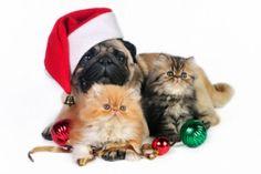 cani-e-gatti-Natale