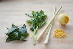 Herbal Teas to Grow & Drink (via @food52) http://bit.ly/INOmls  #diy #greenthumbs