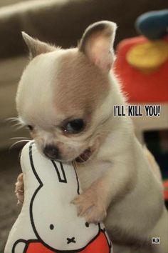 Sooooooo Cute <3 Don't even think of touching My cookie !!!!!