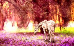 Scarica sfondi cavallo bianco, prato, le farfalle, i cavalli
