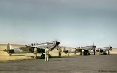 Three Spitfires (two with tear drop canopies) looking resplendent in their new scheme of semi-gloss Extra Dark Sea Grey and Medium Sea Grey,most probably at Zwartkop Air Base early in 1950. The D-type roundels were replaced with the orange centred Springbok version later that year. Photo; George Wiehahn via Conrad Wiehahn.