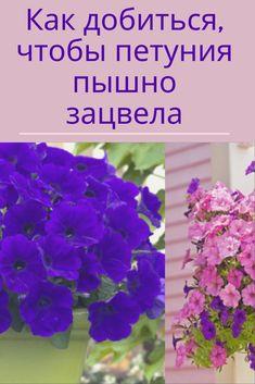 Подвесные Корзины, Красивые Сады, Сады, Цветы, Ботаника, Садоводство