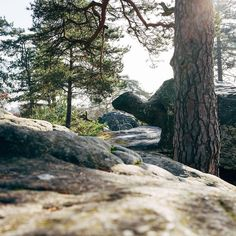 La tortue #tortoise #tortue #anthropomorphism #rocks #stones #nature #landscape #forest #nemours #explore #climbing #hiddenplace #gems #leica #leicaq #madeinwetzlar #bokek #detail #wander #igersfrance