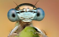 """""""Dragonfly with one large drop of water on its head"""" - photographer Ondrej Pakan's macro photographs of insects in the drops of dew"""