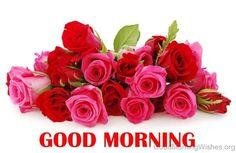 Good Morning Rose Flowers