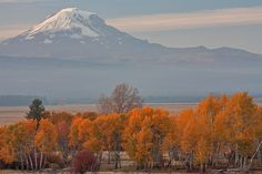 Mt. Adams Fall Color, Glenwood, Washington