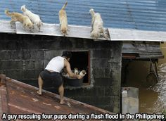 A kind soul rescues four pups during a flash flood in the Philippines