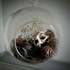 Acquired a glass terrarium recently and finally...