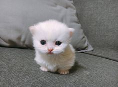 My god this kitten is so cute