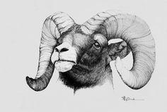 sheep pen drawing - חיפוש ב-Google