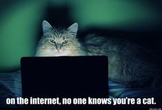 if you are reading this please tell me if you are a cat                 LOL
