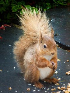 Red Squirrel enjoying the patio outside our Patterdale Holiday Cottage May 2017 Self Catering Cottages, Red Squirrel, Cumbria, Lake District, Patio, Bird, Holiday, Animals, Vacations