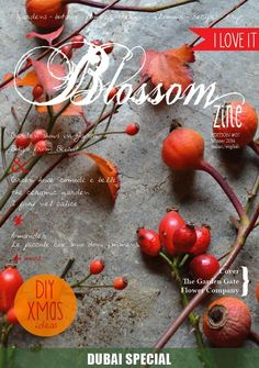 the Winter issue is out now! click here www.blossomzine.eu DIY Christmas ideas  Special Insert Dubai City As You've Never Seen it Before