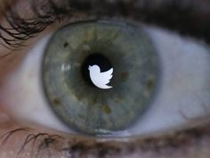 Twitter to create personalised timelines when people sign up - News - Gadgets and Tech - The Independent