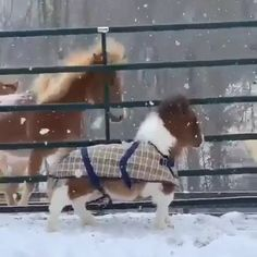 Cute Little Animals, Cute Funny Animals, Cute Dogs, Cute Baby Horses, Animal Pictures, Cute Pictures, Cute Animal Videos, Pet Videos, Horse Videos