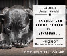 #HUND #RECHT - #Tieranwalt #Ackenheil: http://www.der-tieranwalt.de #Tierrechtskanzlei 06136-762833 info@tierrecht-anwalt.de #tierkanzlei #tierrechtskanzlei #tierheim #dog #shelter #pet