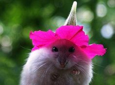 Pink flower with hamster