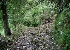 Deserted trail
