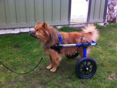 Dogs use wheelchairs, too.