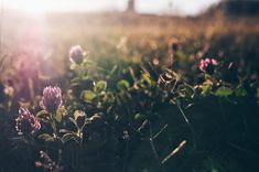 Atardecer Floral, Dandelion, Pastel, Flowers, Flower Photos, Naturaleza, Plants, Fotografia, Cake