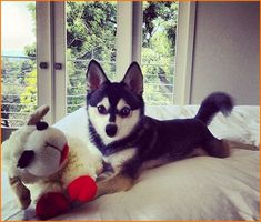 james maslow and fox