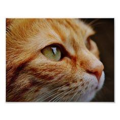 Cat Poster  #Cat_Poster  #Cat #Poster