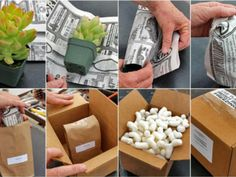 How to Send Succulent Plants by Mail