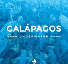 ≫∙ An epic #underwater adventure you can't miss! Visit us and check out the video and story! « ••• » Hoy te invitamos a una aventura de buceo viajando por uno de los lugares más naturales del mundo. ¡Te esperamos en el blog! ➳ @innatelygypsea