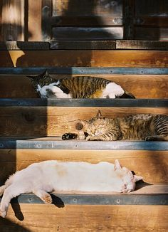 Cat stairs by tane_aki