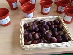 Autumn conker counting Autumn Eyfs Activities, Morning Activities, Nursery Activities, Outside Activities, Preschool Activities, Harvest Eyfs, Maths Eyfs, Conkers, Outdoor Learning