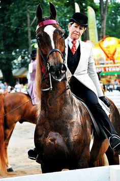 The Mighty Thor...American Saddlebred