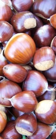 Irish nut growers, guide of what will grow and requirements