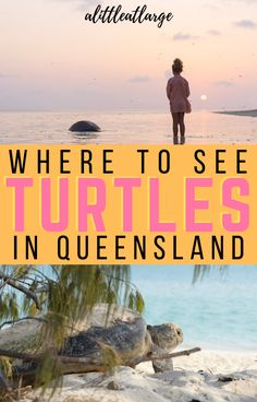 Read here for the best places in Queensland to see and even swim with turtles! #queensland #greatbarrierreef #turtles #australianwildlife Family Adventure, Adventure Travel, Travel With Kids, Family Travel, Gold Coast Theme Parks, Australian Beach, Boat Tours, Great Barrier Reef, Australia Travel