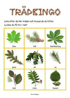 Nature Hunt Bingo - A super fun outdoor game for kids that encourages exploration of the world around them! Educational Activities For Kids, Preschool Activities, Outdoor Activities, Bingo, Kids Barn, Learn Swedish, Swedish Language, Nature Hunt, Gardening Photography