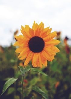 ~but they were roses. i was just a sunflower~