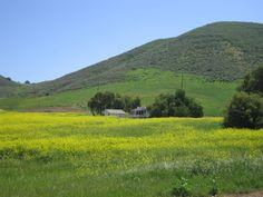 McCrea Ranch, Thousand Oaks, California