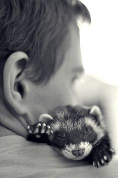 Ferret hug. Check out our blog at www.critterzoneusa.com/pages/blog for great info on all kinds of animals!