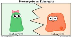 We have a new GIF that compares prokaryotes and eukaryotes! Remember all the rest of our GIFs are available at http://amoebagifs.blogspot.com! #AmoebaGIFs
