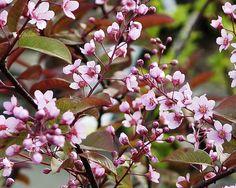 Haiku X 131 - Tree - - Poem by Sunshine Smile Garden Trees, Outdoor Gardens, Planters, Home And Garden, Backyard, Nature, Gardening, Studios, Dreams