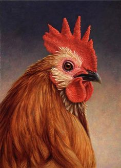 """""""Portrait of a Rooster"""" 