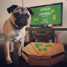 Οι δύο καλύτεροι σου φίλοι! 🍕🐶❤️ 2 Best Friends, Funny Moments, Pizza, Fan, In This Moment, Dogs, Animals, Animales, Animaux