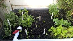 Added some new plants, raddish, domain, manoa all from seed. Also, mint cilantro, spinach and gourmet blend lettuce.