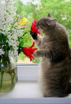 """Stop and smell the flowers!"" Oooops, stop and smell the tulips!"