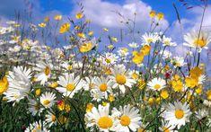 фото цветов - Поиск в Google