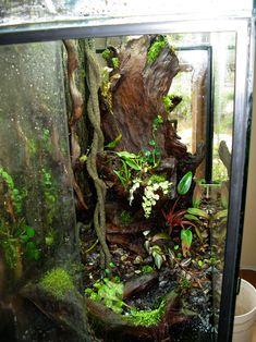 setting up a terrarium Tree Frog Terrarium, Terrarium Tank, Snake Terrarium, Frog Habitat, Gecko Habitat, Crested Gecko Care, Gecko Vivarium, Reptile Room, Reptile Cage