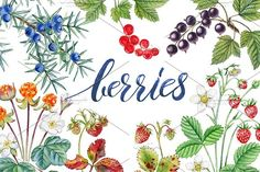 Berries by Watercolor life on @creativemarket