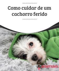 Como cuidar de um cachorro ferido   Seu #cachorro sofreu um #acidente? Encontrou um #cachorro ferido devido a um #atropelamento? Saiba como agir diante dessas situações. #Saúde