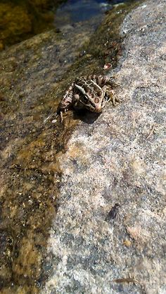"This summer fun "" frog and fly "" moment down at the river is sure to make you jump! Join us for more Stowe Farm Community moments in the making at www.stowefarm.org"