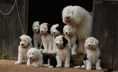 Took forever. 8 puppies. Family portrait. | Funny Pictures, Quotes, Pics, Photos, Images. Videos of Really Very Cute animals.